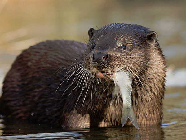 Otter fencing supplies